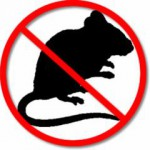 O que atrai os ratos para a sua residência ou empresa?