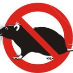 Antes da dedetização, bons hábitos podem afastar ratos