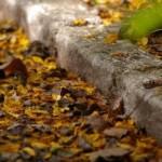 Evite entupimentos por folhas do quintal