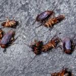 Calor aumenta a necessidade de cuidados com insetos