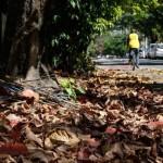 Como evitar entupimento por folhas no outono?