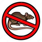 Algumas dicas para evitar e combater os ratos