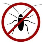 O verão e as baratas: Como prevenir com dedetização?